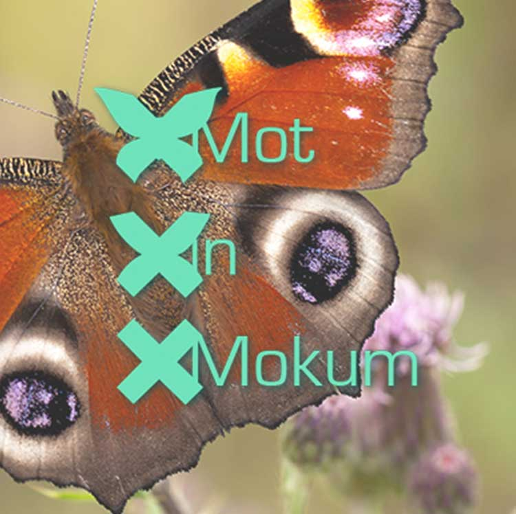 Mot in Mokum